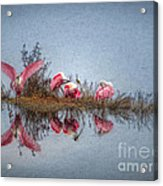 Roseate Spoonbills At Rest Acrylic Print