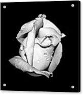 Rosebud In Black And White Acrylic Print