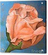 Rosebud Peaches And Cream Acrylic Print