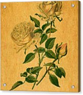 Roses Are Golden Acrylic Print