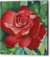 Roses Are Red Acrylic Print