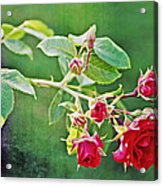 Roses Are Red My Love Acrylic Print