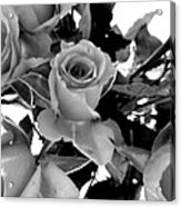 Roses Black And White Acrylic Print