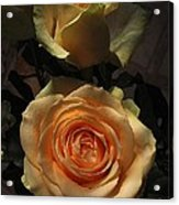 Roses Forever_2 Acrylic Print