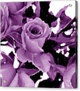Roses - Lilac Acrylic Print