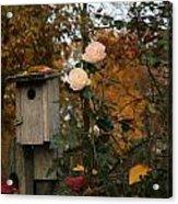 Roses Of Fall Acrylic Print