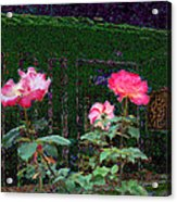 Roses Of South Pasadena 1 Acrylic Print by Kenneth James