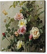 Roses On A Wall Acrylic Print