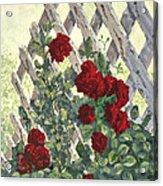 Roses On Lattice Acrylic Print