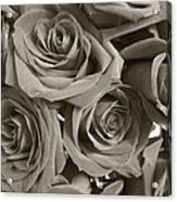 Roses On Your Wall Sepia Acrylic Print