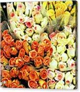 Roses 01 Acrylic Print