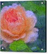 Roses Splendor Acrylic Print