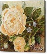 Roses Sublime Acrylic Print