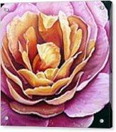 Rosy Dew Acrylic Print
