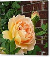 Rosy Sunshine Acrylic Print