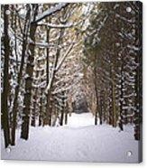 Roth Park Trail 2 Acrylic Print