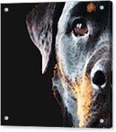 Rottie Love - Rottweiler Art By Sharon Cummings Acrylic Print