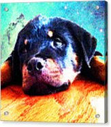 Rottie Puppy By Sharon Cummings Acrylic Print by Sharon Cummings