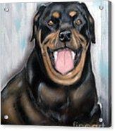 Rottweiler Acrylic Print by Chris Dreher