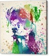 Rottweiler Splash Acrylic Print by Aged Pixel