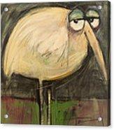 Rotund Bird Acrylic Print