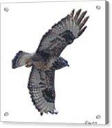 Rough-legged Hawk In Flight-signed-#4318 Acrylic Print