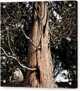 Roukenglentree Acrylic Print