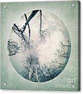 round treetops I Acrylic Print by Priska Wettstein