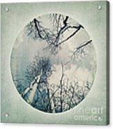 round treetops II Acrylic Print by Priska Wettstein