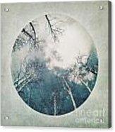 round treetops III Acrylic Print