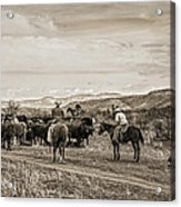 Rounding Up Cattle In Cornville Arizona Sepia Acrylic Print