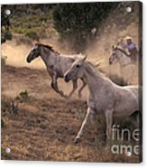 Rounding Up Horses On The Ranch Acrylic Print