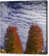 Rows Of Red Autumn Trees With Cirus Clouds Acrylic Print