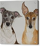 Roxie And Bruno The Greyhounds Acrylic Print