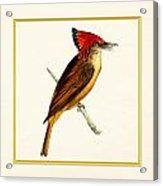 Royal Flycatcher Square Acrylic Print