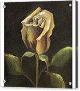 Royal Gold Bud Acrylic Print by Nancy Edwards