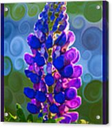 Royal Purple Lupine Flower Abstract Art Acrylic Print