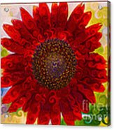 Royal Red Sunflower Acrylic Print