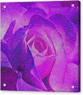 Royal Rose Acrylic Print