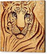 Royal Tiger Coffee Painting Acrylic Print