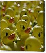 Rubber Ducks Acrylic Print