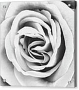 Rubellite Rose Bw Palm Springs Acrylic Print