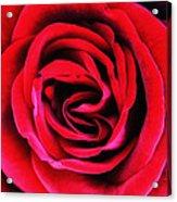 Rubellite Rose Palm Springs Acrylic Print