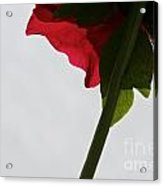 Ruby Exposure Acrylic Print