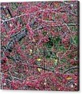Ruby Lattice Acrylic Print