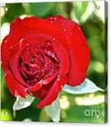 Ruby Rose Diamond Dust Acrylic Print
