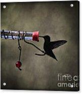 Ruby Silhouette Acrylic Print