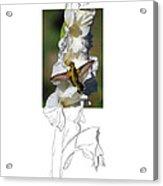 Ruby-throated Hummingbird 2am-104192 Acrylic Print
