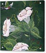 Hummingbird And Lilies Acrylic Print