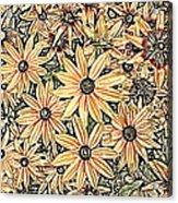 Rudbeckia - Rudbeckie Acrylic Print